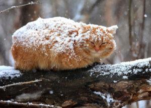 sloi-strashnyi-grustnyi-v-snegu-kot