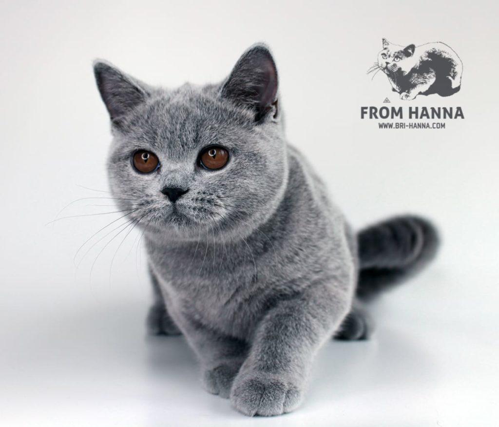 5-month-golda-from-hanna