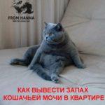 Как убрать, чем вывести запах кошачьей мочи