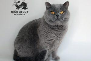 Почему кошка лижет волосы человека, как убрать привычку?
