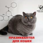 Praziquantel инструкция по применению для кошек