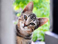 Сколько лет живут коты и кошки в домашних условиях