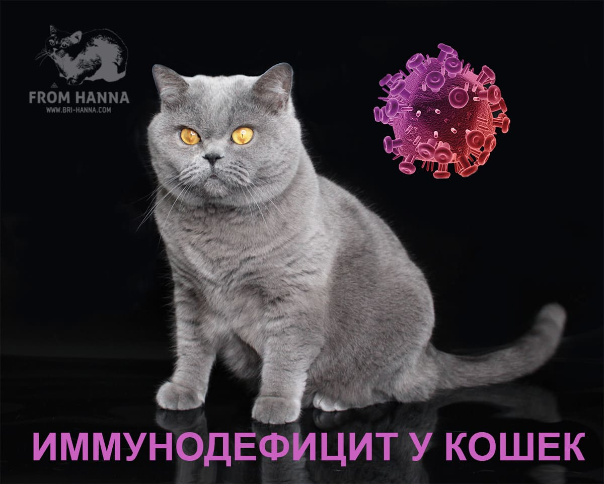 Что такое вирусный иммунодефицит у кошек?