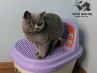 Как приучить котёнка, взрослую кошку к лотку в квартире