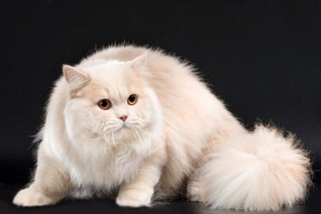 BLH-e-cat