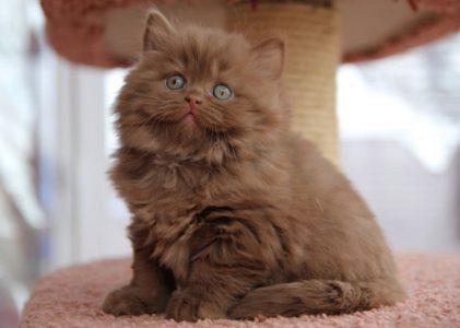 BLH-o-kitten