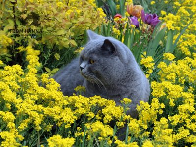 allergy-to-cats