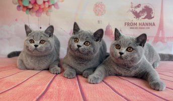 bri_hanna_from-hanna_cats