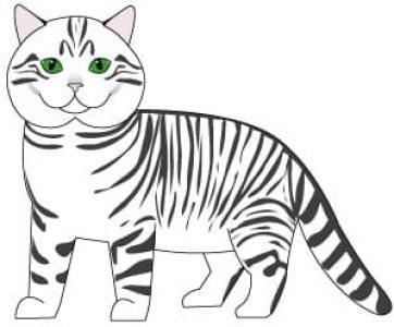cat-maskerel-tabby