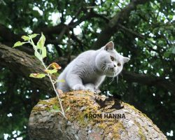 dante_from_hanna_11m