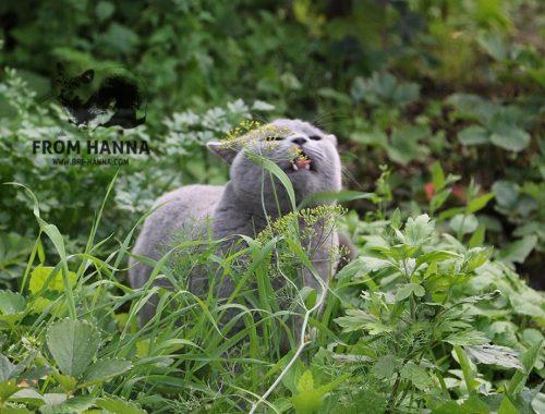 dante_from_hanna_bri-hanna
