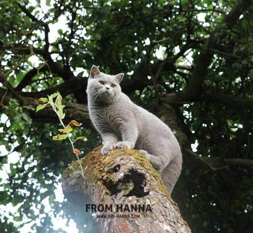 dante_from_hanna_brittish