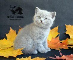 dante_from_hanna_kitten