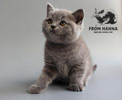 dante_from_hanna_pet