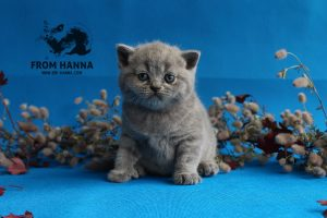 daphne_from_hanna_kitten