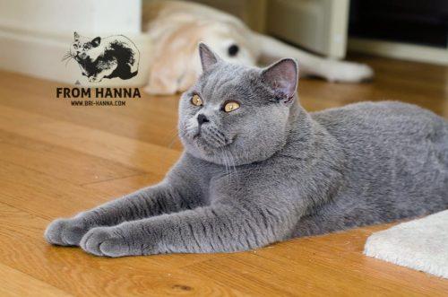 darwin_from_hanna_cat