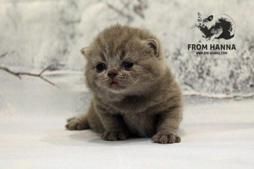 darwin_from_hanna_kitten