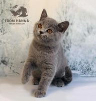 edda_from_hanna_cat