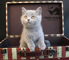 edda_from_hanna_kitten