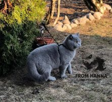 eika_from_hanna_british_blue
