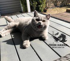 eika_from_hanna_cat_blue