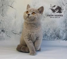 eira_from_hanna_kitten