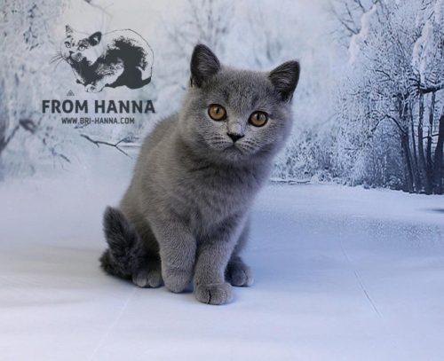 elin_from_hanna_cat