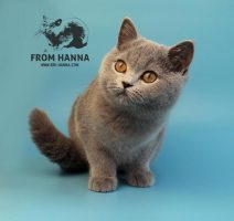 elin_from_hanna_kitten