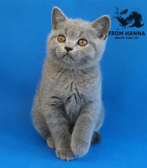 emory_from_hanna_cat