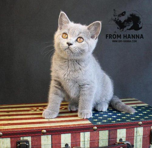 emory_from_hanna_kitten
