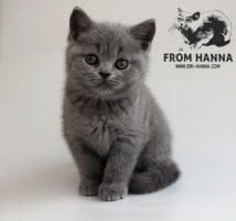 eyja_from_hanna_blue