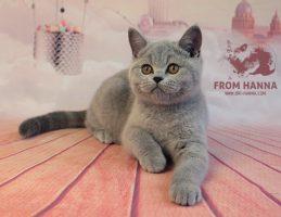 frodo3.5m_bri-hanna_kitten