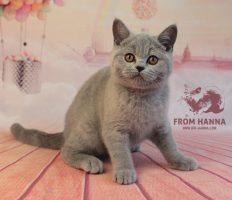 frodo3.5m_bri-hanna_kittens