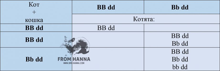 kalkuljator-okrasa-golubykh-koshek