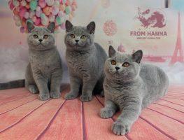 kittens_litterF_from-hanna_bri-hanna