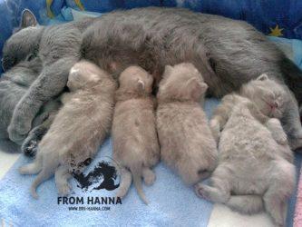 litter_A_kittens