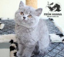 luxury_ayna_of_hanna