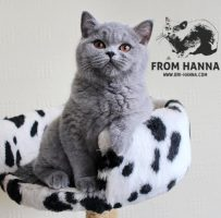 luxury_ayna_of_hanna_blue