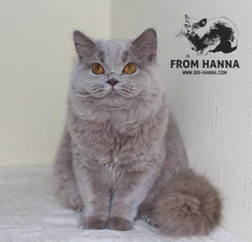 luxury_catherine_of_hanna