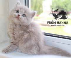 luxury_catherine_of_hanna_LH