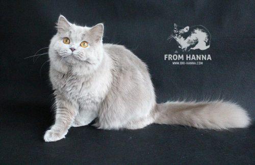luxury_catherine_of_hanna_cat