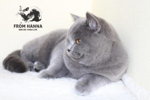luxury_charlie_of_hanna_blue