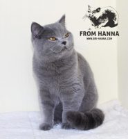 luxury_charlie_of_hanna_cat