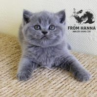 luxury_clinton_of_hanna_cat