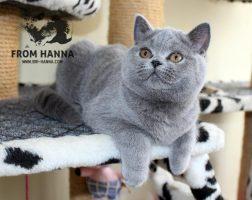 luxury_fraya_of_hanna_bsh
