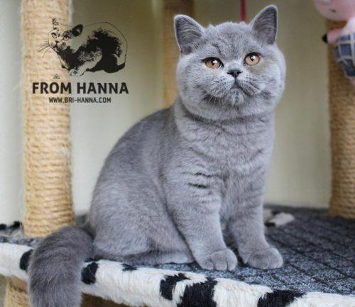 luxury_lina_of_hanna_blue