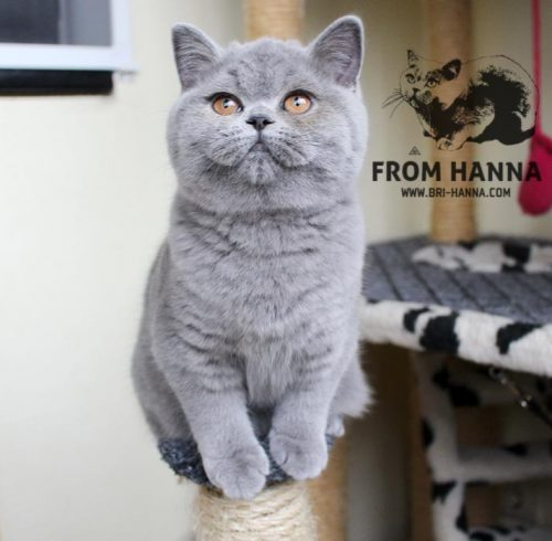 luxury_lina_of_hanna_bsh