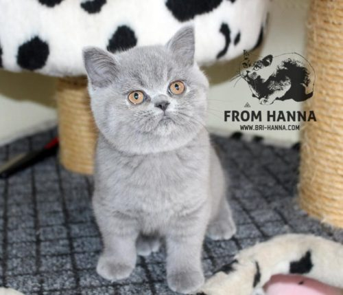 luxury_lina_of_hanna_cat