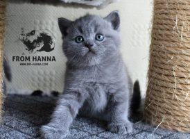 luxury_loki_of_hanna_blue
