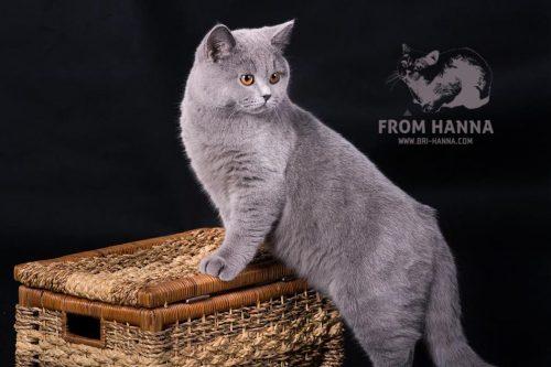 luxury_loki_of_hanna_cat